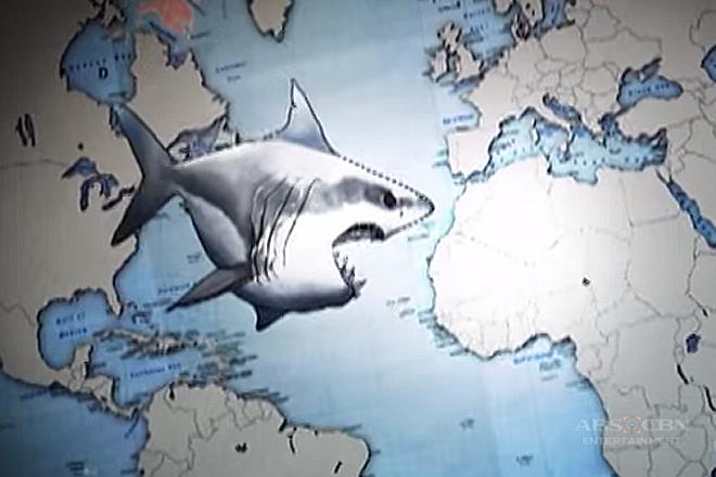 Shark | Katampok-tampok, Kamangha-manghang Kaalaman Thumbnail