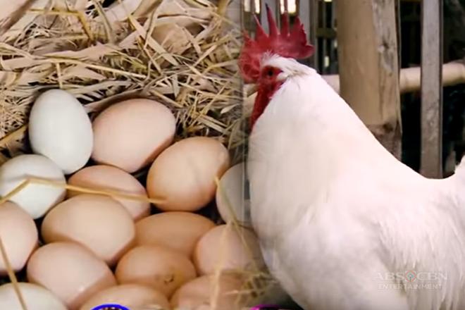 DV Boer Farm - Chickens   Team Yey Timeout Thumbnail