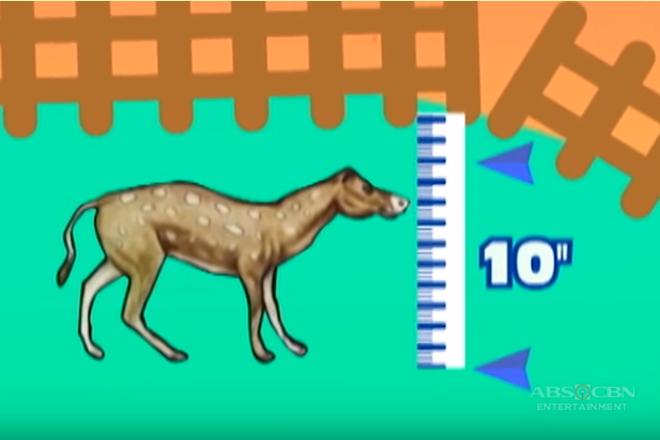 Mini Horse | Katampok-tampok, Kamangha-manghang Kaalaman Thumbnail